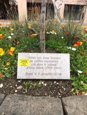 """Sticker de BDS appelant au boycott de produits israéliens sur un mémorial en hommage à Anne Frank. On peut lire sur le sticker """"Chez le pharmacien, TEVA, je n'en veux PAS - Boycott Israël"""""""