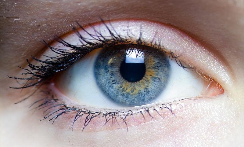 Israël : Cor Neat, une cornée artificielle rend la vue aux aveugles