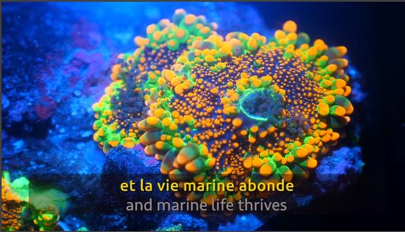 Le béton écologique qui préserve les océans