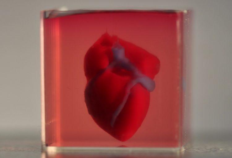 Coeur vivant créé avec une imprimante 3D
