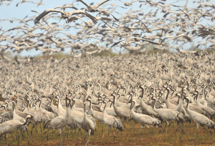 Oiseaux migrateurs en Israël