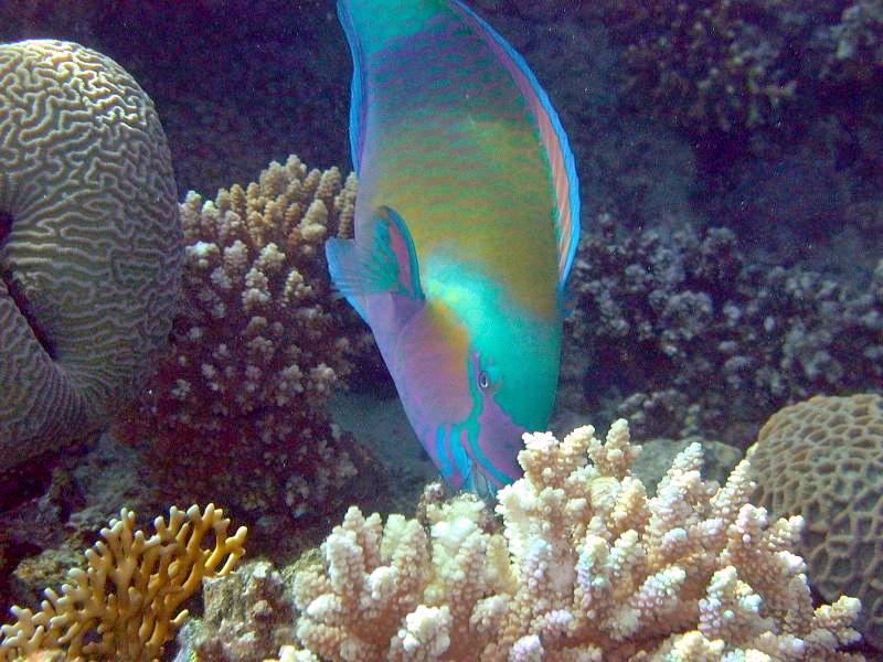 Une équipe de choc pour préserver l'environnement marin d'Israël