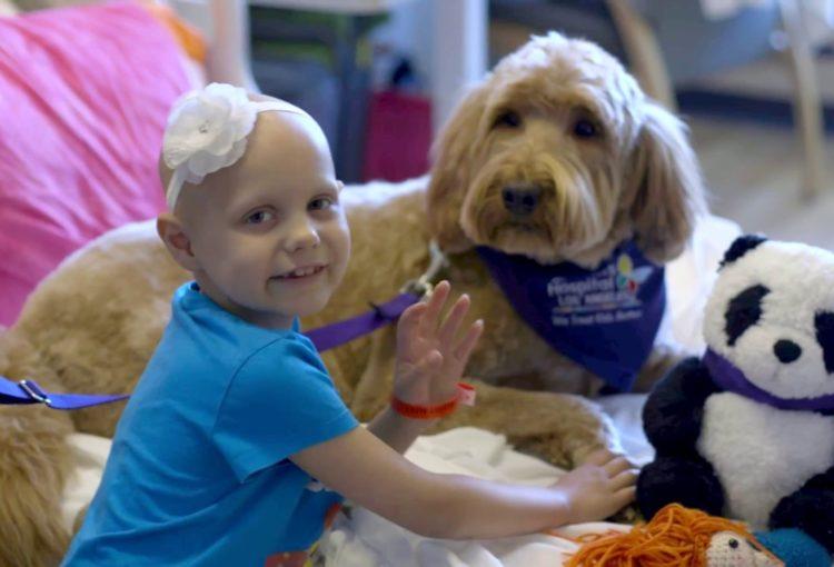 Zoothérapie chien thérapeutique