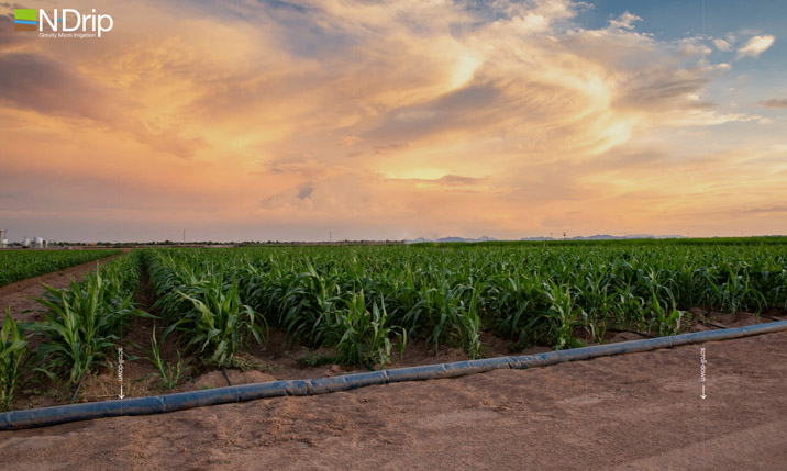 Système d'irrigation au goutte-à-goutte par gravité de N-Drip